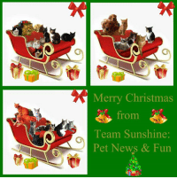 Merry Christmas wishes from Team Sunshine: Pet News & Fun! Purrlease like their page and check each day to find out what's happening in the furbaby world of FB! <3: Merry Christmas  from  Team Sunshine  Pet News & Fun Merry Christmas wishes from Team Sunshine: Pet News & Fun! Purrlease like their page and check each day to find out what's happening in the furbaby world of FB! <3