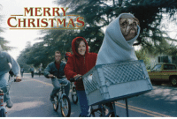 Having a weird looking dog = fun Christmas cards: MERRY  CHRISTMAS Having a weird looking dog = fun Christmas cards