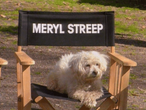 Tumblr, Wow, and Blog: MERYL STREEP chainsawpunk: wow she really can play any role