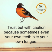 trust: Mesmerizing  Quotes  Trust but with caution  because sometimes even  your own teeth bite your  own tongue