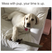 Memes, Time, and Pup: Mess with pup, your time is up  BadtasteBB swiper no swiping jk swipe for more