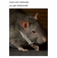Love, Memes, and Ratatouille: mess With ratatouille  you get stabatouille I love memes