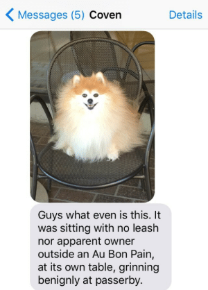 is this it: Messages (5) Coven  Details  Guys what even is this. It  was sitting with no leash  nor apparent owner  outside an Au Bon Pain,  at its own table, grinning  benignly at passerby.
