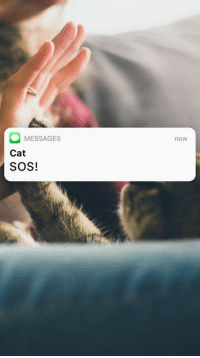 Cats, Lazy, and Memes: MESSAGES  Cat  SOS!  now lazy cat's middle name is danger 🙄
