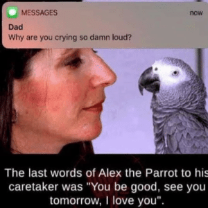 "I stole this meme: MESSAGES  Dad  Why are you crying so damn loud?  now  The last words of Alex the Parrot to his  caretaker was ""You be good, see you  tomorrow, I love you"". I stole this meme"