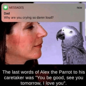 "eMo pictures - jestPic.com: MESSAGES  Dad  Why are you crying so damn loud?  now  The last words of Alex the Parrot to his  caretaker was ""You be good, see you  tomorrow, I love you"" eMo pictures - jestPic.com"