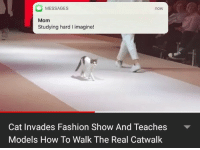 All about the high grades: MESSAGES  Mom  Studying hard I imagine!  now  Cat Invades Fashion Show And Teaches  Models How To Walk The Real Catwalk All about the high grades