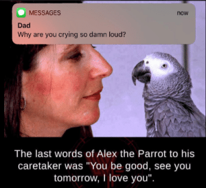 "Alex was a good boy: MESSAGES  now  Dad  Why are you crying so damn loud?  The last words of Alex the Parrot to his  caretaker was ""You be good, see yoiu  tomorrow, I love you"". Alex was a good boy"