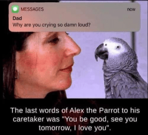 "Morning :(: MESSAGES  now  Dad  Why are you crying so damn loud?  The last words of Alex the Parrot to his  caretaker was ""You be good, see you  tomorrow, I love you Morning :("