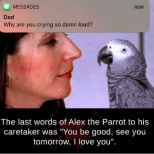 "This is sad af: MESSAGES  now  Dad  Why are you crying so damn loud?  The last words of Alex the Parrot to his  caretaker was ""You be good, see you  tomorrow, I love you"". This is sad af"