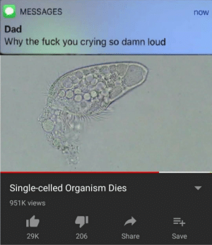 Crying So: MESSAGES  now  Dad  Why the fuck you crying so damn loud  Single-celled Organism Dies  951K views  Share  206  29K  Save