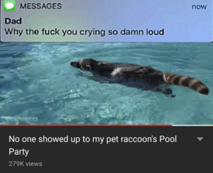 Times like this are when you see who your real friends are via /r/memes http://bit.ly/2UoPdEx: MESSAGES  now  Dad  Why the fuck you crying so damn loud  @levin.memes  No one showed up to my pet raccoon's Pool  Party  279K views Times like this are when you see who your real friends are via /r/memes http://bit.ly/2UoPdEx