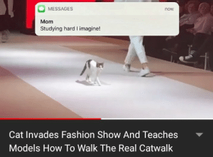 Fashion, How To, and Models: MESSAGES  now  Mom  Studying hard I imagine!  Cat Invades Fashion Show And Teaches  Models How To Walk The Real Catwalk Just one more video