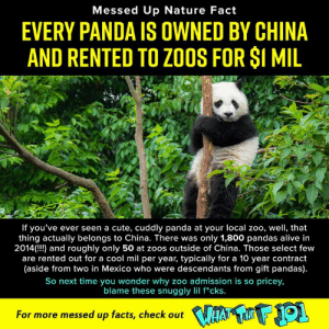 Alive, Crazy, and Cute: Messed Up Nature Fact  EVERY PANDA IS OWNED BY CHINA  AND RENTED TO ZOOS FOR SI MIL  If you've ever seen a cute, cuddly panda at your local zoo, well, that  thing actually belongs to China. There was only 1,800 pandas alive in  2014( and roughly only 50 at zoos outside of China. Those select few  are rented out for a cool mil per year, typically for a 10 year contract  (aside from two in Mexico who were descendants from gift pandas).  So next time you wonder why zoo admission is so pricey,  blame these snuggly lil f*cks.  For more messed up facts, check out Learn more crazy animal facts on What the F 101, full first season streaming now on DROPOUT --> http://bit.ly/2TjEt4W
