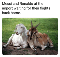 Memes, Home, and Messi: Messi and Ronaldo at the  airport waiting for their flights  back home. GOATs 😂🐐👋