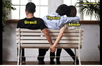Memes, Science, and 🤖: Mestato K.Matter  Thymine  Uracil  Adenine Join our group: Science Memes  (Credit to Mostafa Matter)