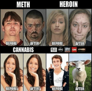 The corporate media 🇺🇸🇺🇸: METH  HEROIN  BEFORE  BEFOREMMAFTE  CANNABIS  AFTER  e Free Thoug  BEFORE AFTER  BEFORE  AFTER The corporate media 🇺🇸🇺🇸
