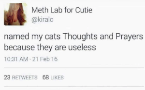 Jdjdhdhdj 😂: Meth Lab for Cutie  @kiralc  named my cats Thoughts and Prayers  because they are useless  10:31 AM 21 Feb 16  23 RETWEETS 68 LIKES Jdjdhdhdj 😂