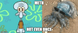 Squidward really went down hill after loosing his job at the Krusty Krab. by Glasdir FOLLOW 4 MORE MEMES.: METH  NOT EVEN ONCE  imgflip.com Squidward really went down hill after loosing his job at the Krusty Krab. by Glasdir FOLLOW 4 MORE MEMES.