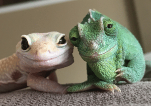 Tumblr, Blog, and Camera: methgrips:  lackyannie:  emmatheward: - Stimpy and Olive not being camera shy. they look like a couple that defied all odds to be together.   so worm.. so tender….