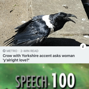 "Love, Memes, and Target: METRO 2-MIN READ  Crow with Yorkshire accent asks woman  'y'alright love?"" 30-minute-memes: Must be druid undercover"