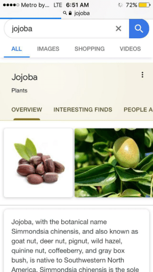 America, Deer, and Shopping: Metro by... LTE 6:51 AM  a jojoba  72%  jojoba  X  ALL  SHOPPING  VIDEOS  IMAGES  Jojoba  Plants  OVERVIEW  PEOPLE A  INTERESTING FINDS  Jojoba, with the botanical name  Simmondsia chinensis, and also known as  goat nut, deer nut, pignut, wild hazel,  quinine nut, coffeeberry, and gray box  bush, is native to Southwestern North  America, Simmondsia chinensis is the sole JOJO PLANT