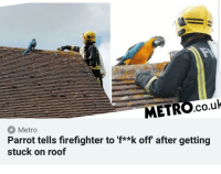Firefighter: METRO.co.uk  Metro  Parrot tells firefighter to 'f**k off' after getting  stuck on roof