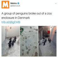 Lets Roll, Memes, and Denmark: Metro  @Metro UK  A group of penguins broke out of a zoo  enclosure in Denmark  tribal/ijBgEMB Let's roll out | 👉 @dabmoms is hilarious