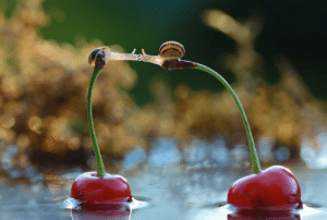 Tumblr, Blog, and Http: metroidtwo:  bedabug:  Snails Kiss On Cherries [photo by Vyacheslav Mishchenk]   EVERYTIME WE TOUCH I GET THIS FEELINGAND EVERYTIME WE KISS I SWEAR I CAN FLY