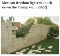 Dank Memes, Freedom Fighter, and Knock: Mexican freedom fighters knock  down the Trump wall (2022)