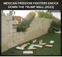 Oh yea baby  Credits: Dank memes gang: MEXICAN FREEDOM FIGHTERS KNOCK  DOWN THE TRUMP WALL (2022)  VIA, 8sHIT NET Oh yea baby  Credits: Dank memes gang