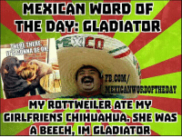 Chihuahua, Gladiator, and fb.com: MEXICAN WORD OF  THE DAY: GLADIATOR  THERE THERE.  BEOK  FB.COM/  MEXICAN WORDOFTHEDAY  MY ROTTWEILER ATE MY  GIRLFRIENS CHIHUAHUA SHE WAS  A BEECH IM GLADIATOR Mexican Word of the Day: Gladiator 😂