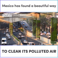 Beautiful, Memes, and Mexico: Mexico has found a beautiful way  ESY  TO CLEAN ITS POLLUTED AIR Mexico has found a beautiful way to clean its polluted air.