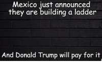 Ladder: Mexico just announced  they are building a ladder  And Donald Trump will pay for it