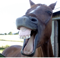 Horses, Mfw, and Good: MFW someone makes a really good joke