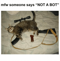 """Mfw, Bot, and Someone: mfw someone says """"NOT A BOT"""" https://t.co/auyoUdZ4jT"""