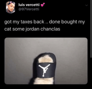 Mi gatito will always look fly during tax season: Mi gatito will always look fly during tax season