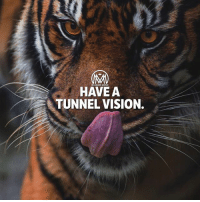 Memes, Vision, and Never: MI  HAVE A  TUNNEL VISION. When you have your passion, you never even think about other things. It's tunnel vision! You go until you get it. 🔥 - tunnelvision passsion success millionairementor
