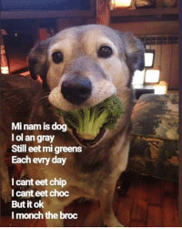 Chip, Dog, and Day: Mi nam is dog  l ol an gray  Still eet mi greens  Each evry day  I cant eet chip  l cant eet choc  But it ok  l monch the broc He healthy