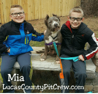 Mia  LucasCountyPitCrew.com Please send warm wishes and congratulations to Mia as she celebrates her very happy adoption day! adoptLCPC