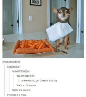 Cheetos, Chihuahua, and Tumblr: miamiacoda  swaysclothingline  asaawhiteperson  where do you get Cheetos that big  that's a chihuahua  Those are carrots.  this post is a mess. Tumblr has ruined my sense of humour