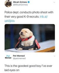 Police, Good, and Boy: Micah Grimes  @MicahGrimes  Police dept. conducts photo shoot with  their very good K-9 recruits. trib.al/  aK6jMx  Pet Pet Memed  Memed @petmemed  This is the goodest good boy l've ever  laid eyes on Look at this cutie Barry fitting