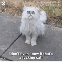 9gag, Fucking, and Memes: michael apaport  lfredw  arrior  Idon't even know if that's  a fucking cat! This will haunt your dreams tonight 📹 @michaelrapaport , @iamrapaport 🐱@wilfredwarrior - cat 9gag