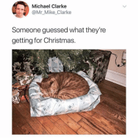 Christmas, Memes, and Michael: Michael Clarke  Mr_Mike Clarke  Someone guessed what they're  getting for Christmas Too excited to even unwrap it. 😻😹 . . . catsbeingcats catgram catsofig adoptapet lazysunday seasonsgreetings memesdaily catmemes catlife christmas