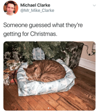 Cats are assholes. https://t.co/KTp2sp7fsq: Michael Clarke  Mr_Mike_Clarke  Someone guessed what they're  getting for Christmas Cats are assholes. https://t.co/KTp2sp7fsq