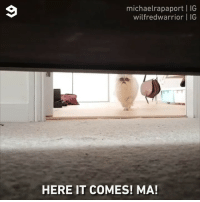 9gag, Memes, and Run: michaelrapaport | IG  wilfredwarrior | IG  HERE IT COMES! MA! You can hide, or, you can run. But when he comes for you, nothing can be done. 🎤 @michaelrapaport @iamrapaport 😺 @wilfredwarrior - theresnowheretohide cat 9gag