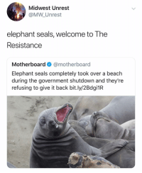 Elephant seals are, in fact, with the shits: Midwest Unrest  @MW Unrest  elephant seals, welcome to The  Resistance  Motherboard@motherboard  Elephant seals completely took over a beach  during the government shutdown and they're  refusing to give it back bit.ly/2Bdgi1R Elephant seals are, in fact, with the shits