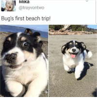 Follow my other account @x__social_butterfly__x ❤: MIKa  atrayvontwo  Bug's first beach trip! Follow my other account @x__social_butterfly__x ❤