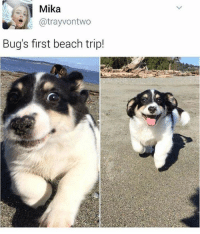 Memes, Beach, and Butterfly: Mika  @trayvontwo  Bug's first beach trip! Follow me @x__social_butterfly__x