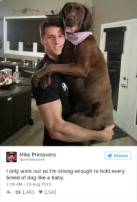 arcampbell94:  He can hold me like a baby. : Mike Primavera  @primawesome  Follow  I only work out so I'm strong enough to hold every  breed of dog like a baby.  2:36 AM 10 Aug 2015  1,461 2,543 arcampbell94:  He can hold me like a baby.